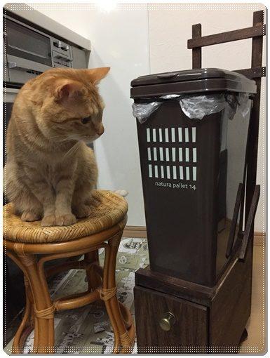 虎丸とゴミ箱台